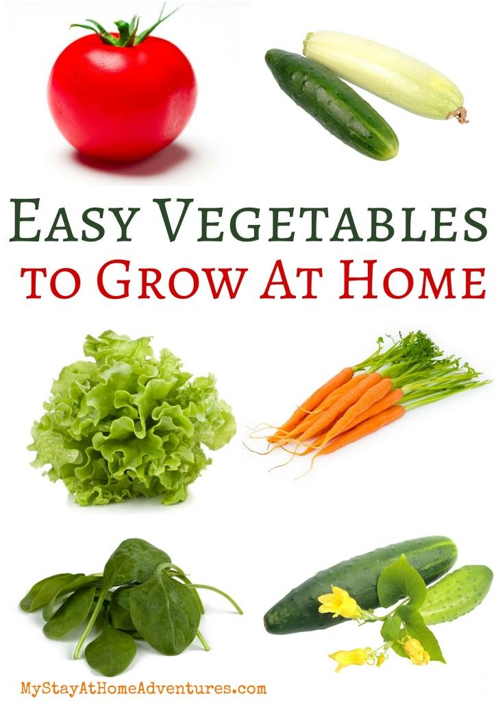 Easy Vegetables To Grow At Home Easy Vegetables To Grow