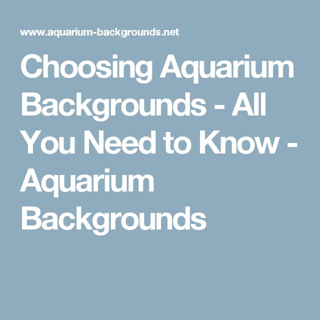 Choosing Aquarium Backgrounds - All You Need to Know - Aquarium Backgrounds