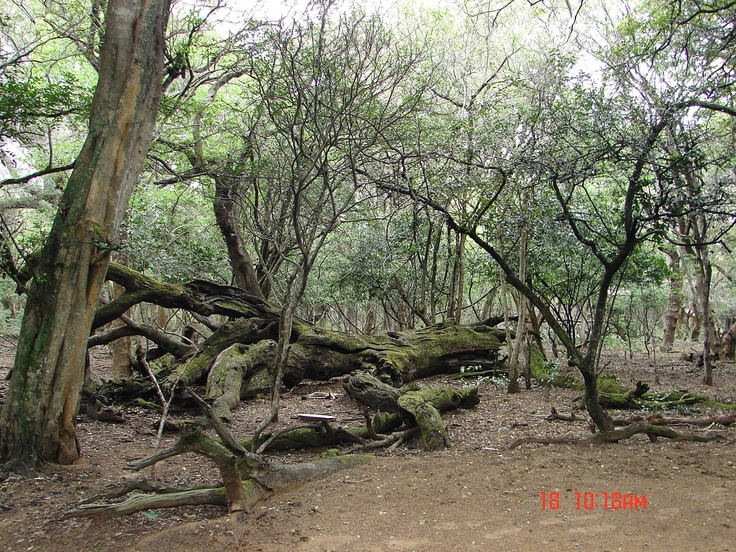Phinda Sand Forest - KZN South Africa