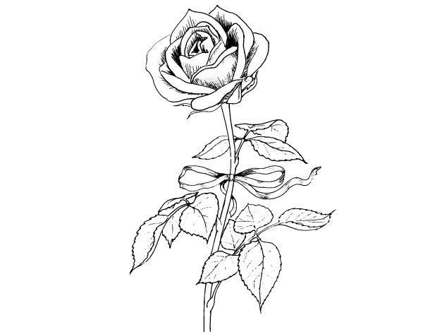 25+ Best Ideas About Dibujo De Una Rosa On Pinterest