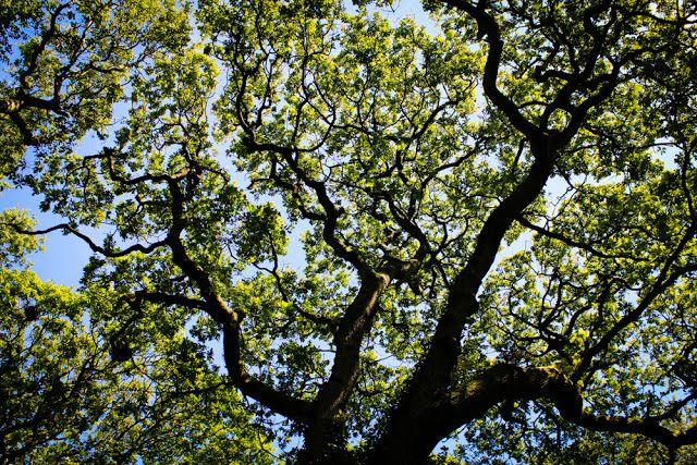 14 best nature images on Pinterest | Natural forms, Art ...