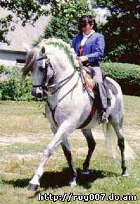 андалузская лошадь, андалузская порода лошадей, фото, фотография