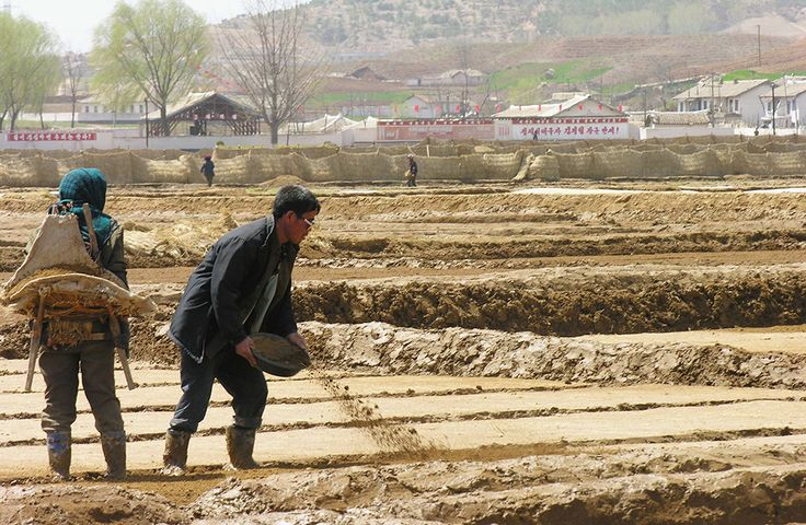 People on a NK cooperative farm planting rice.  Every year, the citizens of North Korea turn out en masse to plant crops they won't get to eat.