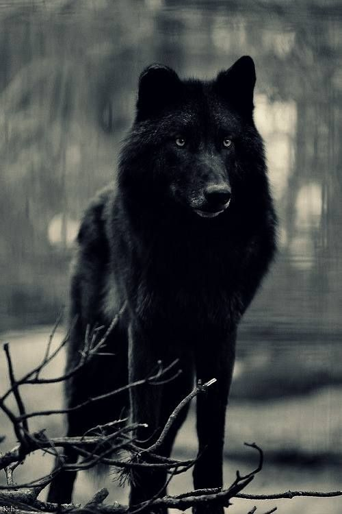 There's no greater secret than those of the wolf!!!