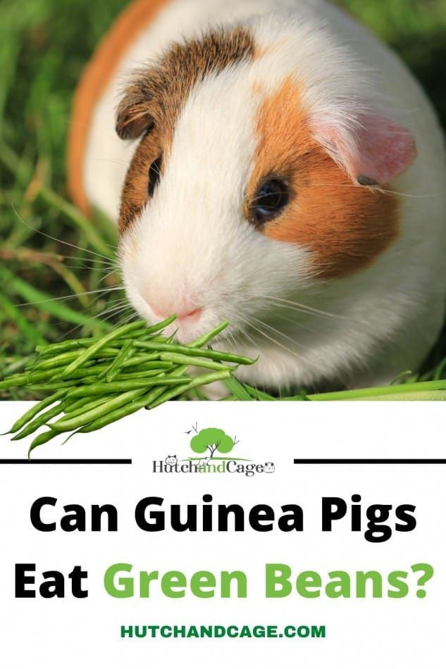 Pin On Pet Nutrition