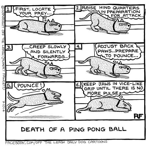 Death of a ping pong ball