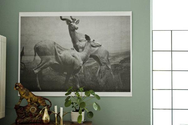 Megaposter Antiloper 685 kr från Le Kiosk