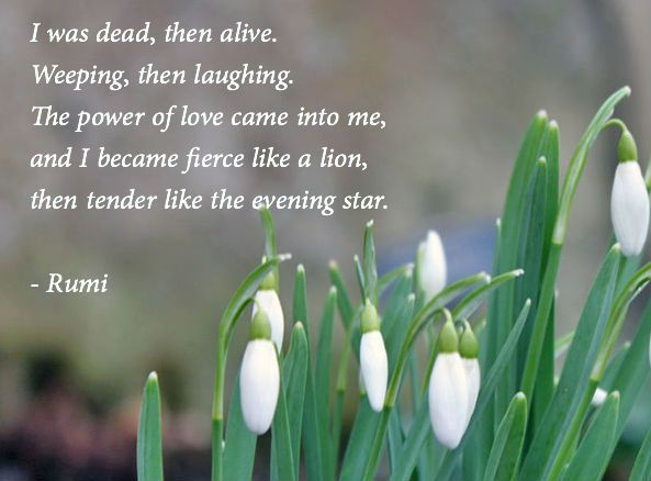 Google Image Result for http://www.poetseers.org/wp-content/uploads/rumi-dead-then-alive-love-snowdrops.jpg