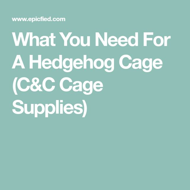 What You Need For A Hedgehog Cage (C&C Cage Supplies)