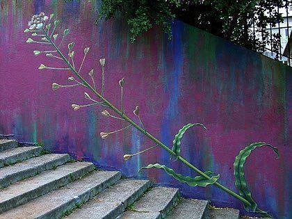 Оформление стен лестницы цветами - красивый стрит-арт #лестница   Flower  #staircase on the wall #streetartstair