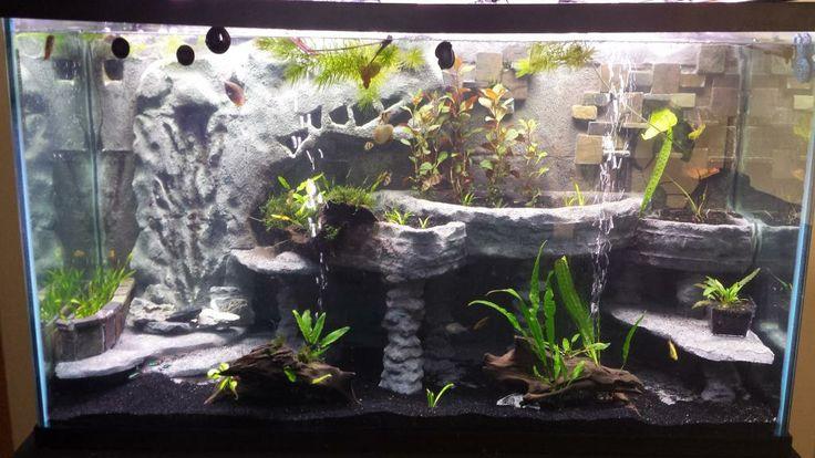 1000 ideas about axolotl tank on pinterest salamanders
