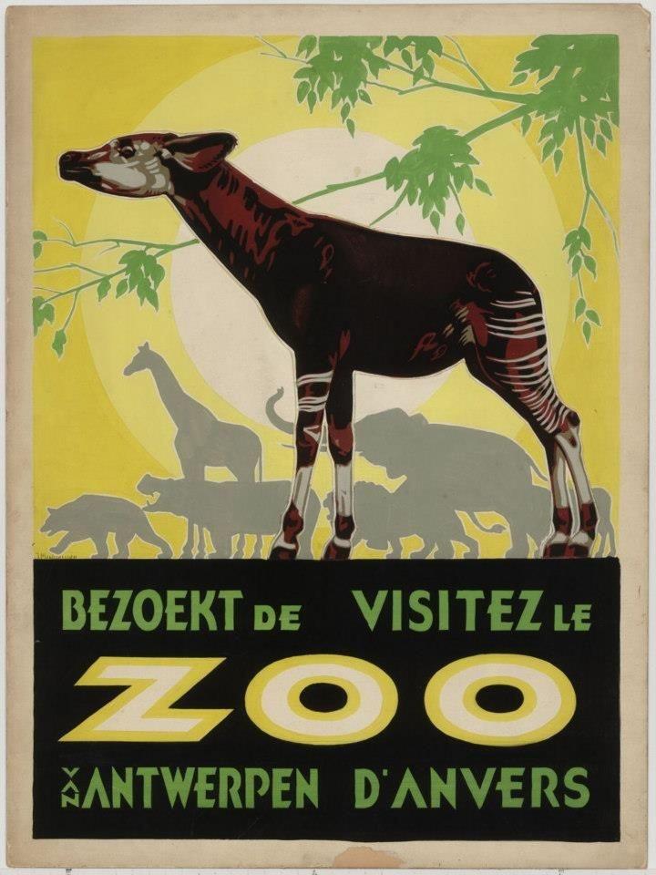 Affiche ZOO Antwerpen okapi