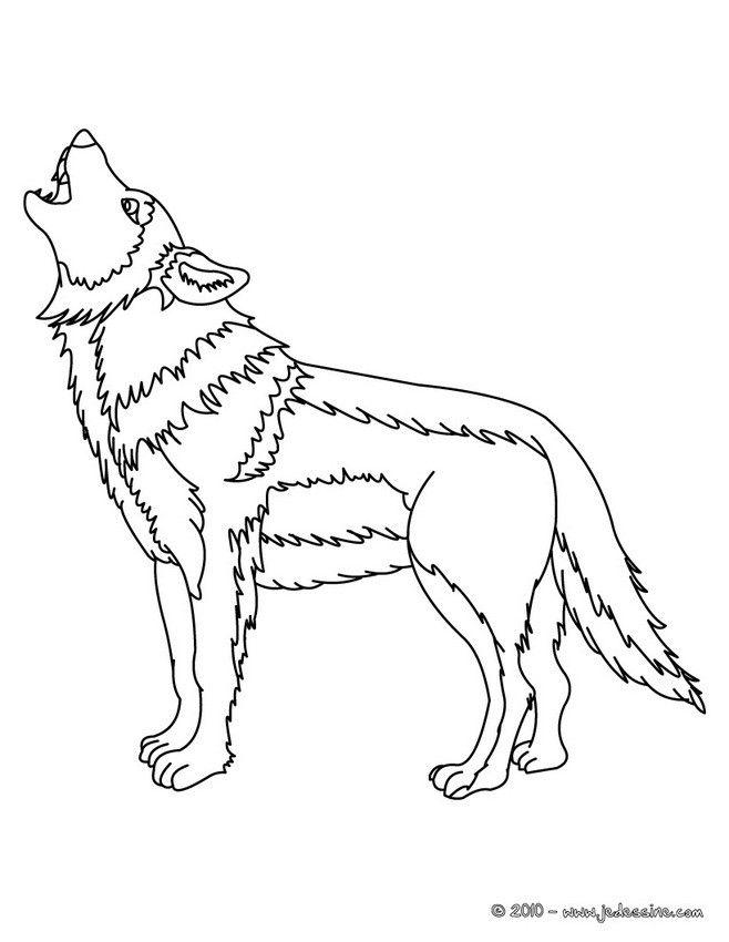 Coloriage D Un Beau Loup Realiste Hurlant Un Joli Coloriage Pour Les Amoureux D Animaux Sauvages Coloriage Loup Coloriage Animaux Coloriage