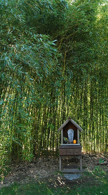 Shrine in the bamboo groveGreen Grief, Goddesses Spirituality Zen, Beautiful Spaces, Sacred Spaces, First House, Bamboo Grove, Green Gulch, Bamboo Forest, Deeply Beautiful