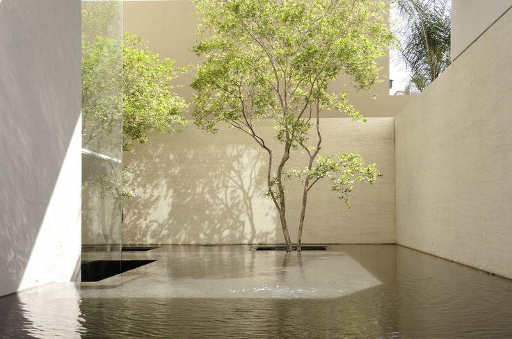 Plantas para jardines modernos: El arte que da vida a tu hogar. www.homify.com.mx/revista