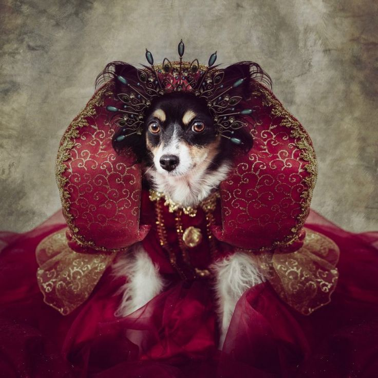 Shelter Pets Project - Peggy Sue by Tammy Swarek