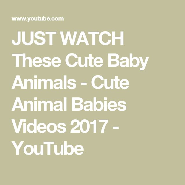JUST WATCH These Cute Baby Animals - Cute Animal Babies Videos 2017 - YouTube