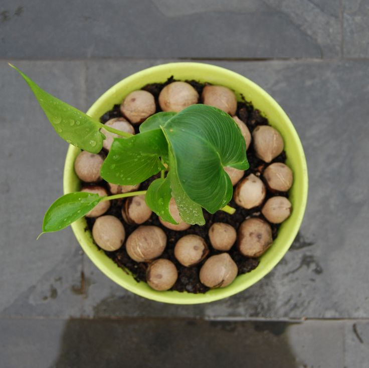 VerdeMaceta.com Plantas decorativas