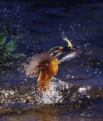 5Photos, Dance Photography, Perfect Time, Amazing Photography, Birds House, Kingfisher Birds, Action Photography, Beautiful Birds, Animal