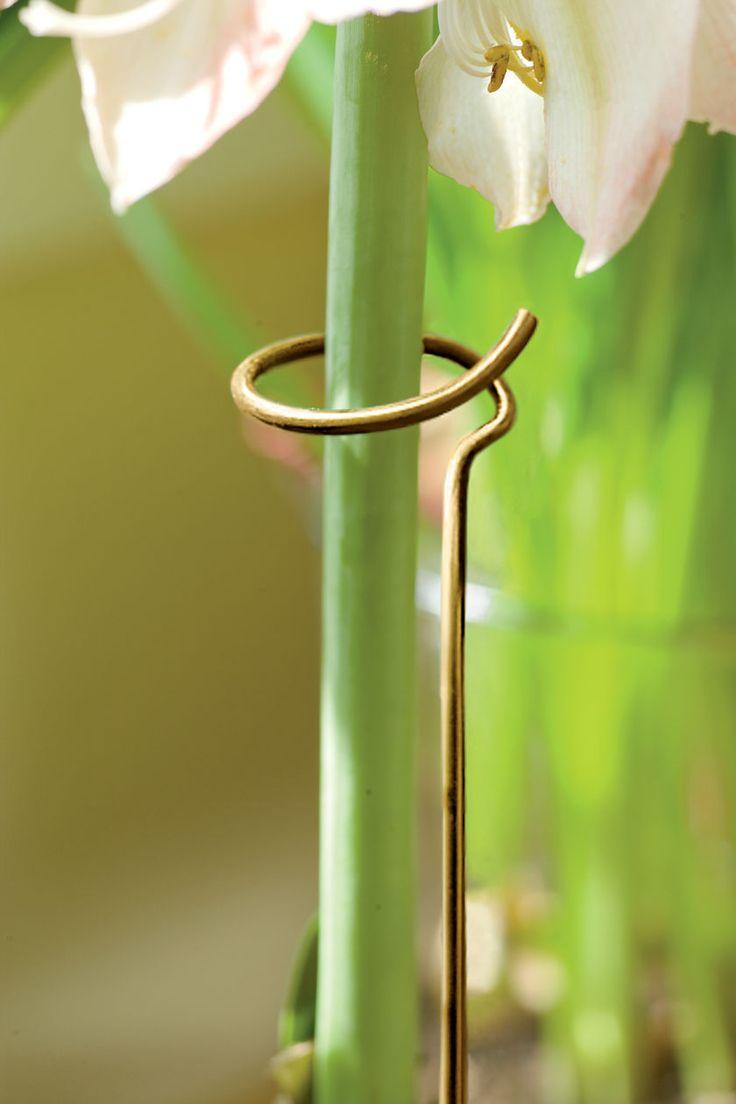 Adjustable Amaryllis Stake Keeps Flowers Standing Tall