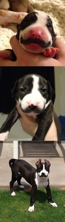 Your mustache will never be as awesome as this dog's mustache