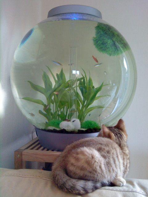 BiOrb Fish Tank and Cat