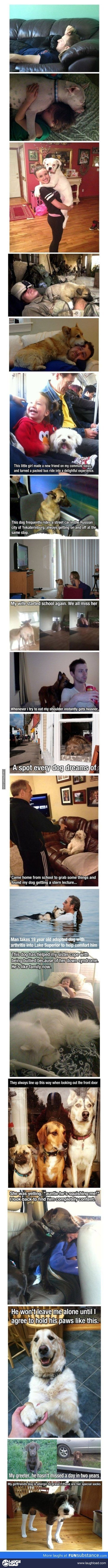 best a images on pinterest cutest animals dog