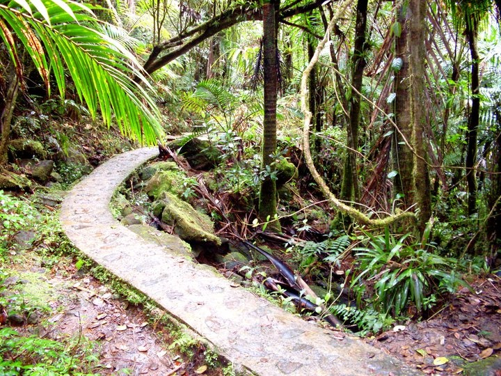 how to go to el yunque from san juan
