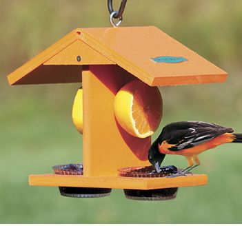 This Eco Friendly Fruit Feeder Will Attract Them All  Are You Missing Out On The Most Beautiful Birds Of Summer?