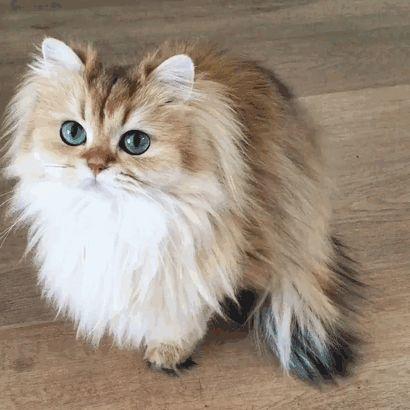 Veja aqui as fotos desta gatinha.