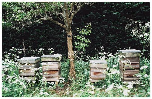 Bee homes-somewhere becca and i have loads of pictures like this but the boxes are all colored!