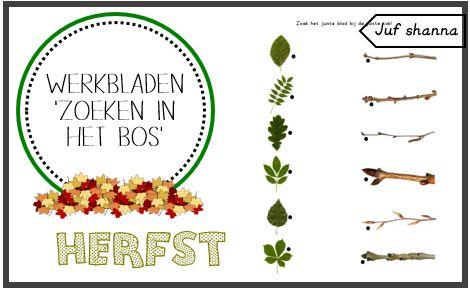 Werkbladen herfst - Zoeken in het bos (Deel 2)