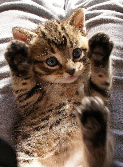 はい、手も足も上げました(^o^) もっと見る