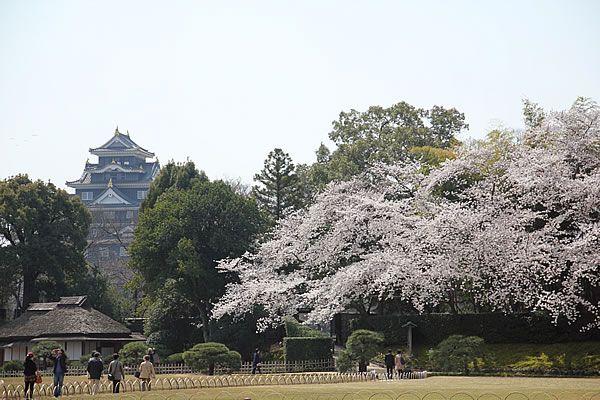 岡山後楽園 桜