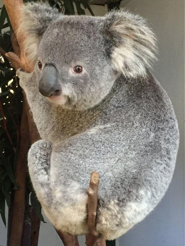 Featherdale Wildlife Park (Blacktown, Australia): Top Tips Before You Go…
