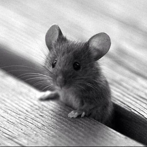 What an adorable mouse!!!