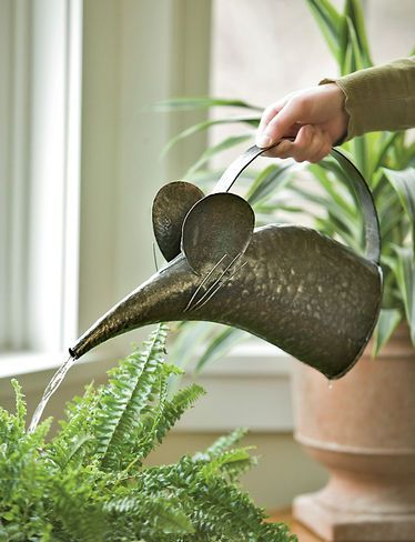 Cutest watering can ever. I bet this would help us actually remember to water our plants!