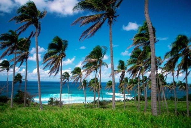 San Cristóbal y Nieves, en el Caribe. Las dos islas están cubiertas de selva y sus playas son perfectas. Una maravillosa combinación.