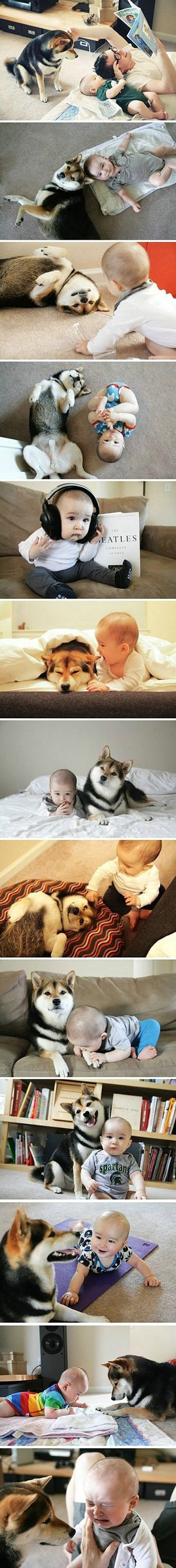 This dog really loves this baby