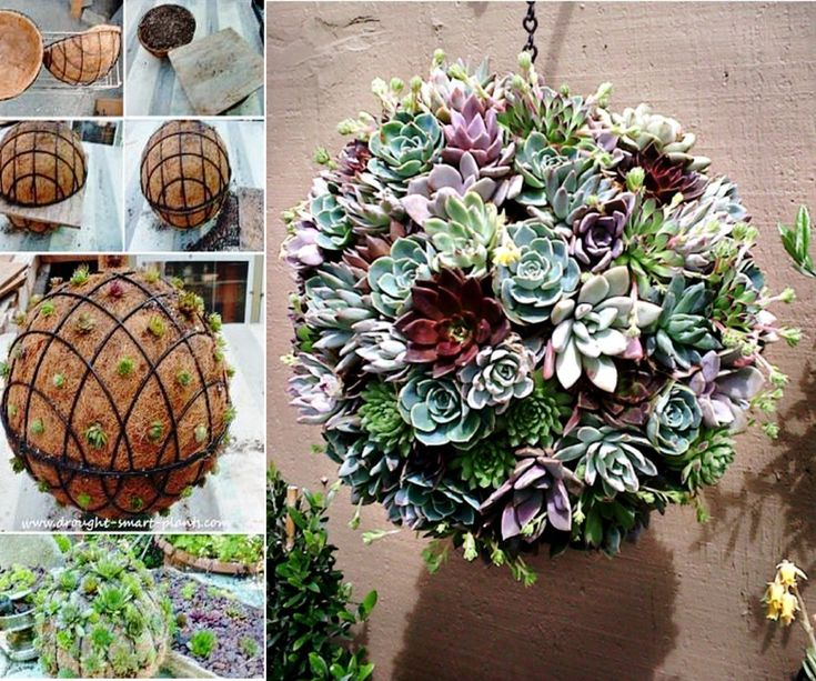 This Succulent Sphere will make a fabulous addition to your backyard. It's low maintenance and looks gorgeous.