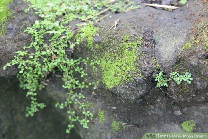 Image titled Make Moss Graffiti Step 1