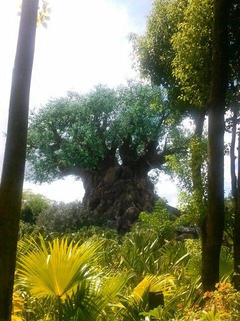 Tree of life at Disney