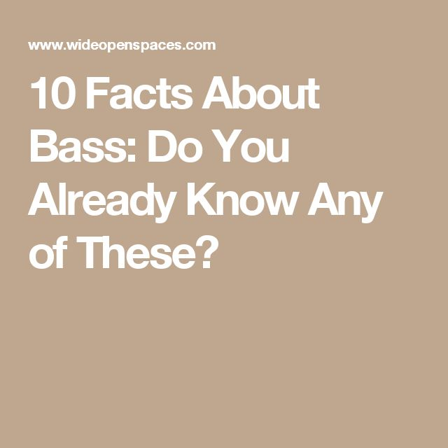 10 Facts About Bass Do You Already Know Any Of These