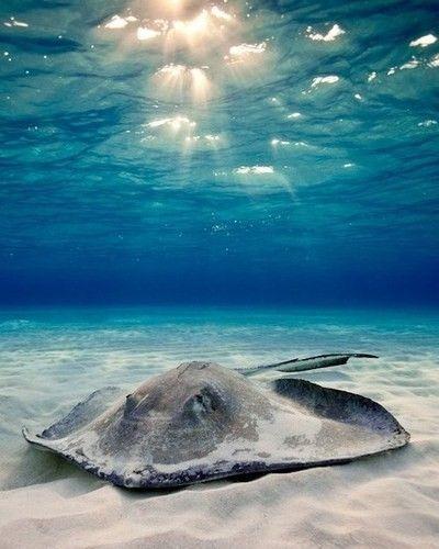 Under the lighting, in the ocean, what lies beneath