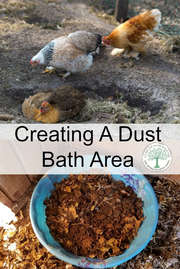 Learn how to create a chicken dust bath area to help keep your flock healthy and happy! TheHomesteadingHippy via @homesteadhippy