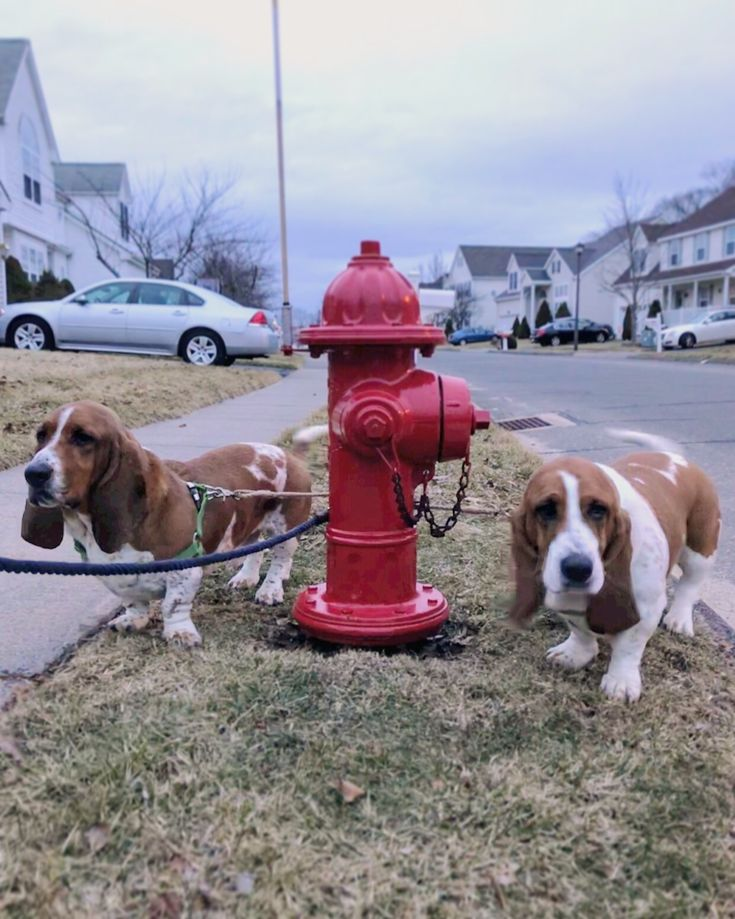 Loophole their names. Happiness is finding a red fire hydrant. -Sherlock+Watson