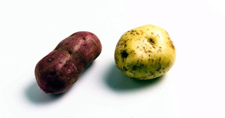 ¿Es malo que crezcan brotes en las papas?. La papa es la hortaliza que ocupa el primer lugar en el mundo y es un importante alimento básico. Cada año el estadounidense promedio consume 125 libras (56 kg) de papas.