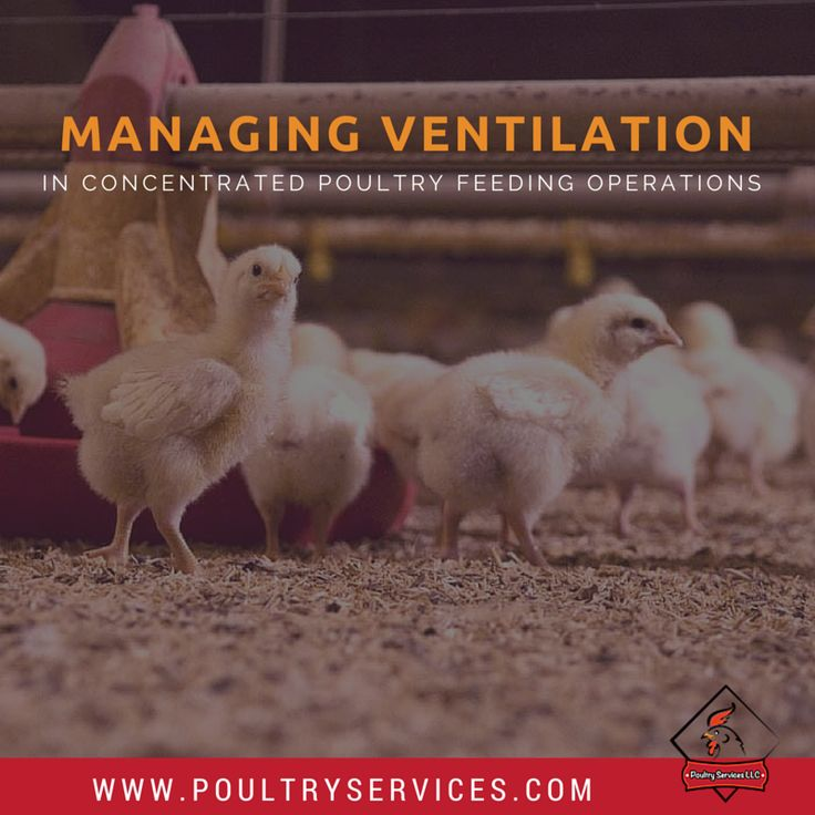 Managing Ventilation In Concentrated Poultry Feeding Operations - http://www.poultryservices.com/blog/managing-ventilation-in-concentrated-poultry-feeding-operations#sthash.qffBEHW9.ZNS3Y7kS.dpbs