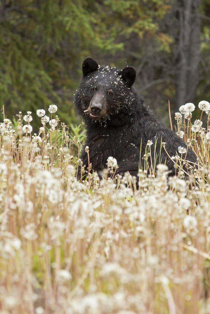 Somebody needs a bath. #blackbear ~ETS