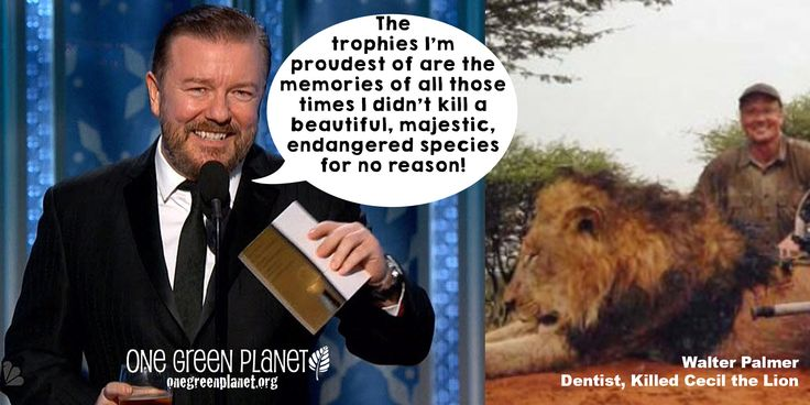 Golden Globes Host Ricky Gervais Gives Out Prestigious Awards to His Favorite Animal Abusers